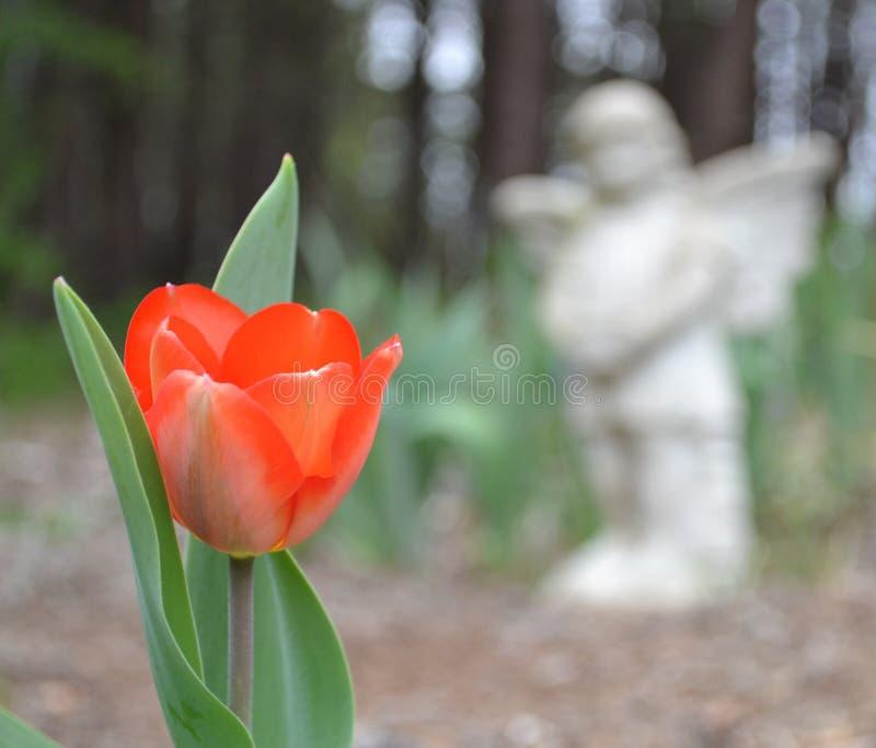 Tulipán y ángel imagen de archivo libre de regalías