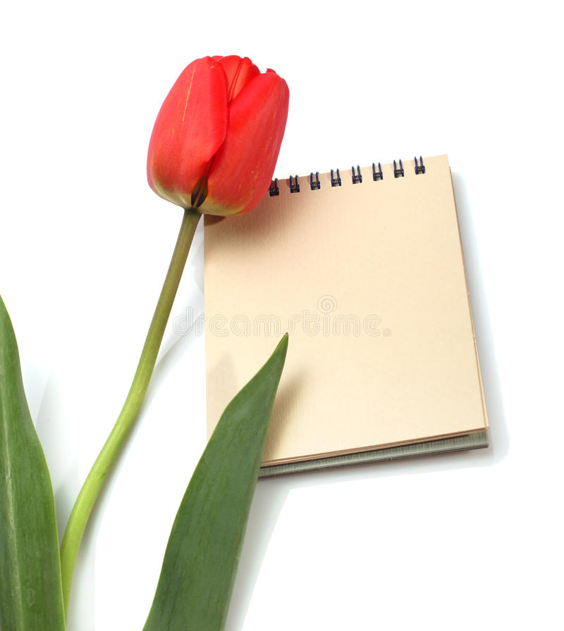 Tulipán y libreta rojos fotografía de archivo