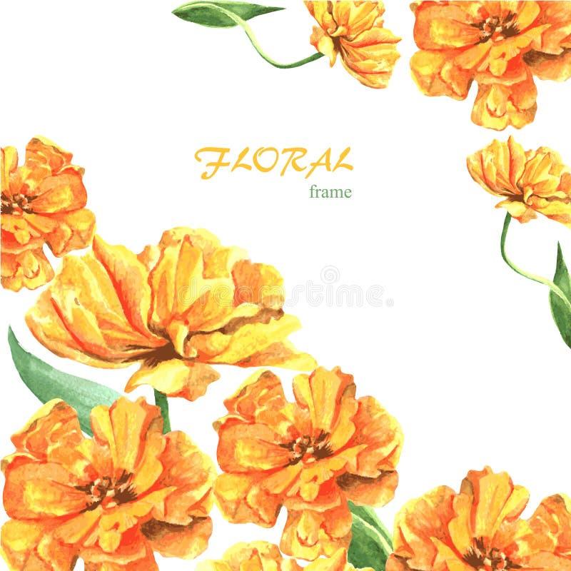 Free Tulip 4 Royalty Free Stock Image - 54162576