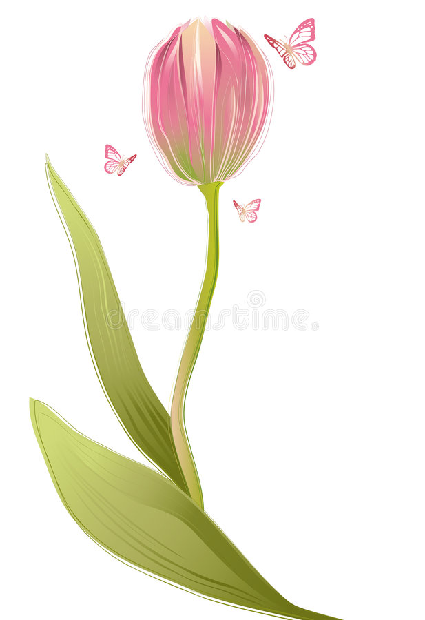 Tulip. Flower with butterflies, vector vector illustration