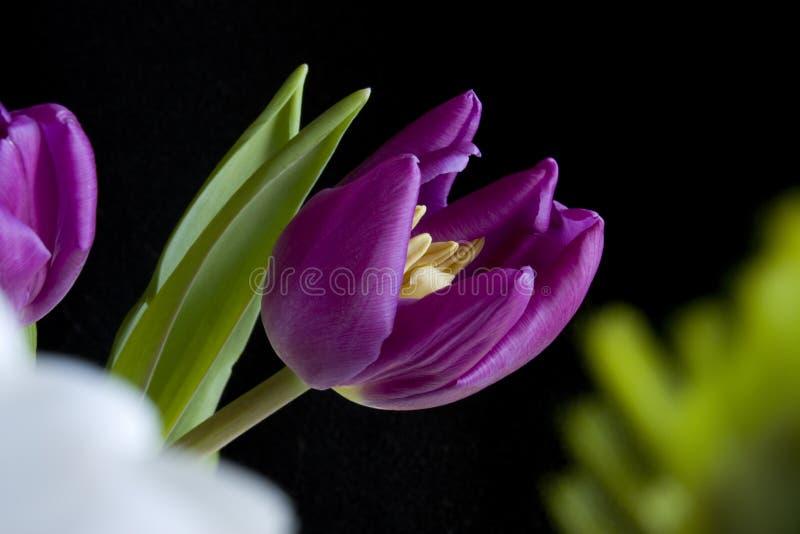 Tulip Arrangement stock photography