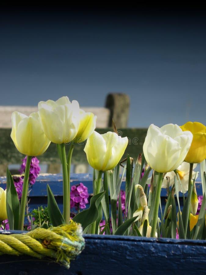 Tulip Boat royalty-vrije stock afbeelding