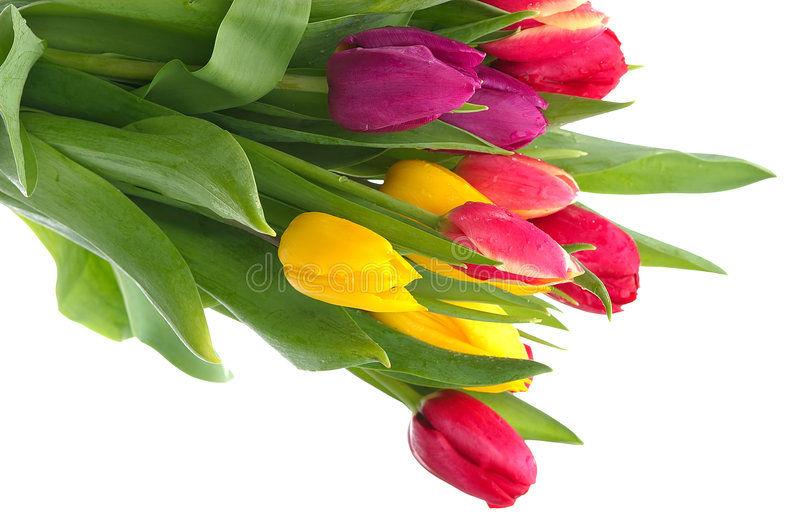 Free Tulip Bouquet Royalty Free Stock Photos - 118398