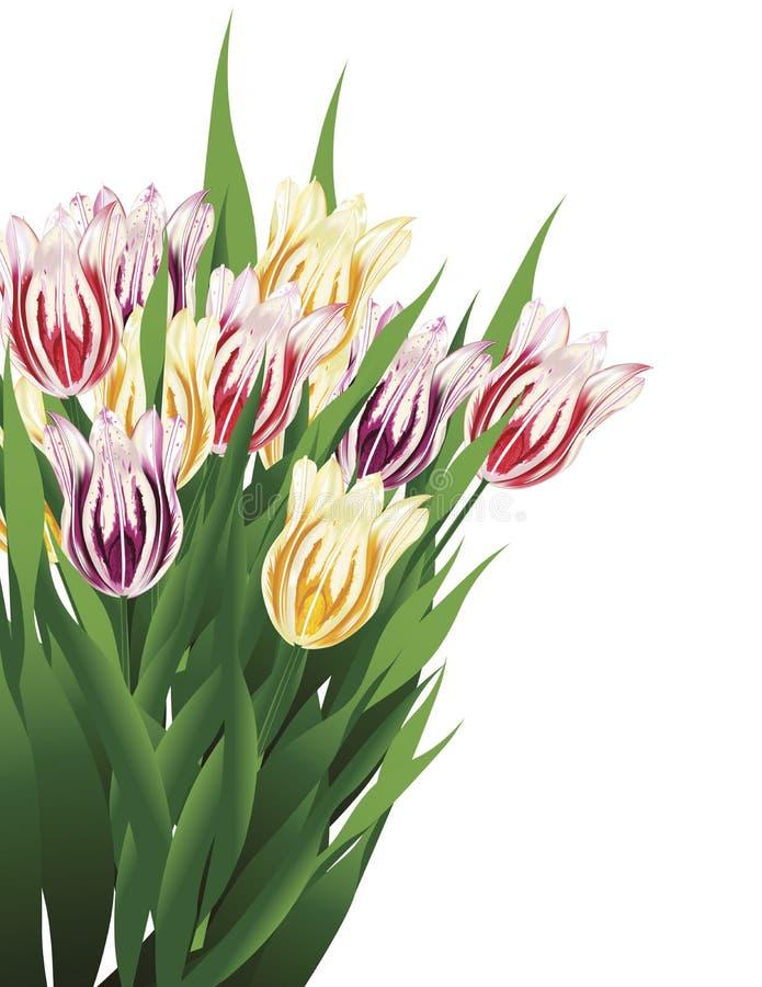 Download Tulip Bouquet stock illustration. Illustration of decoration - 13583535