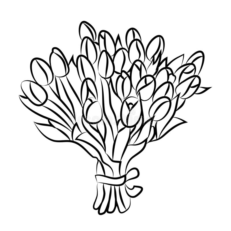 Tulip bouquet contour beautiful graceful. Cuty royalty free illustration