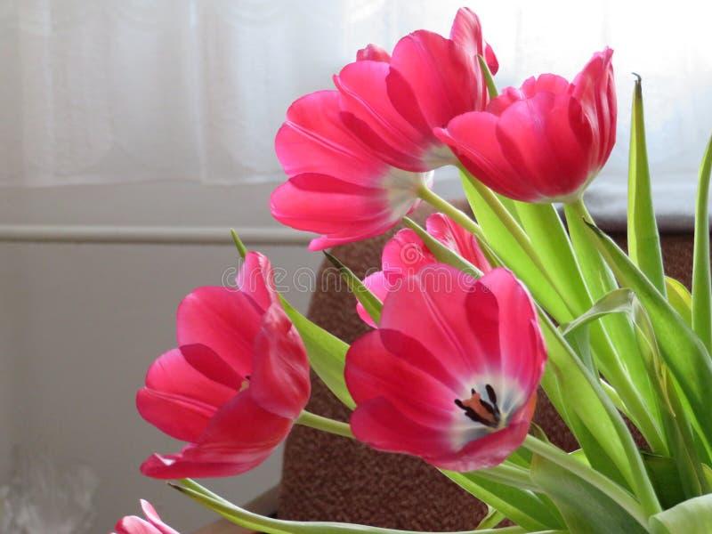 Tulip bouquet stock image