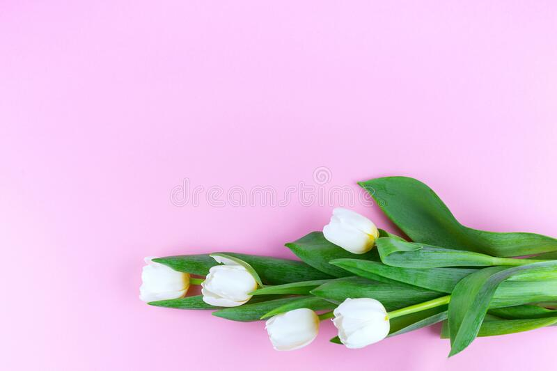 Tulip bouquet. Top view stock photography