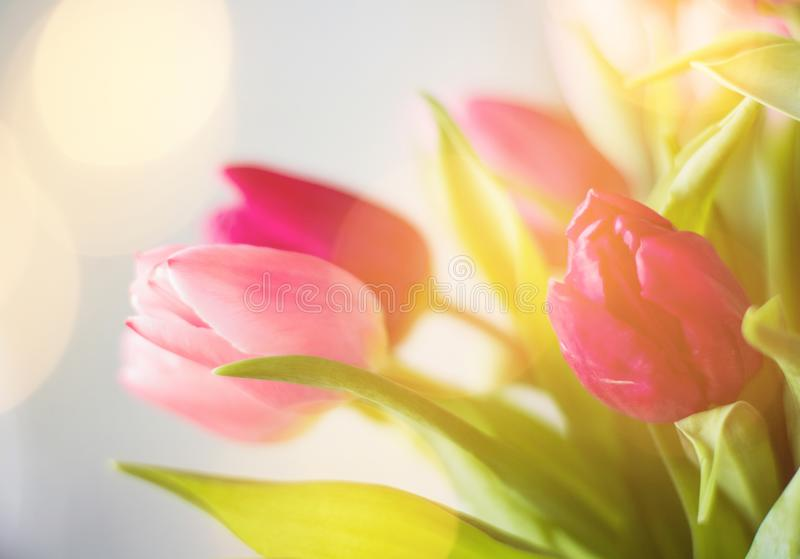 Tulip bouquet - wedding, holiday and floral garden styled concept. Elegant visuals royalty free stock images