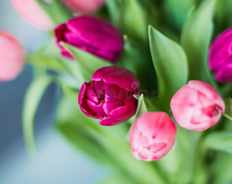 Tulip bouquet - wedding, holiday and floral garden styled concept. Elegant visuals stock photo