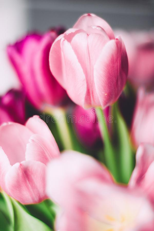 Tulip bouquet - wedding, holiday and floral garden styled concept. Elegant visuals stock image