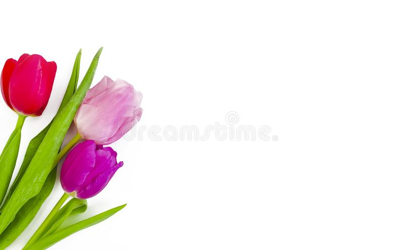 Tulip bouquet on a white background  springtime  beautiful  blossom. Tulip bouquet on a white background frame composition   beautiful springtime stock photography