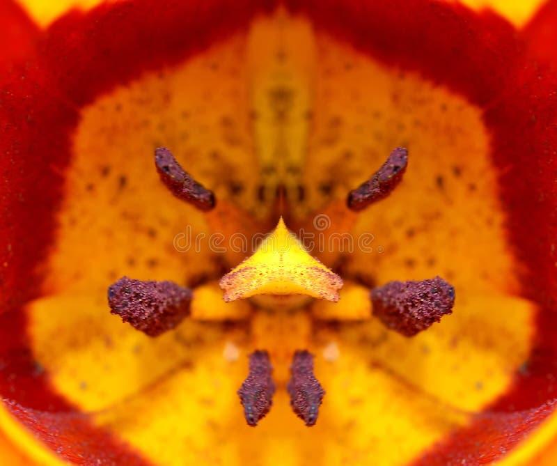 Tulip Closeup Detail stock photos