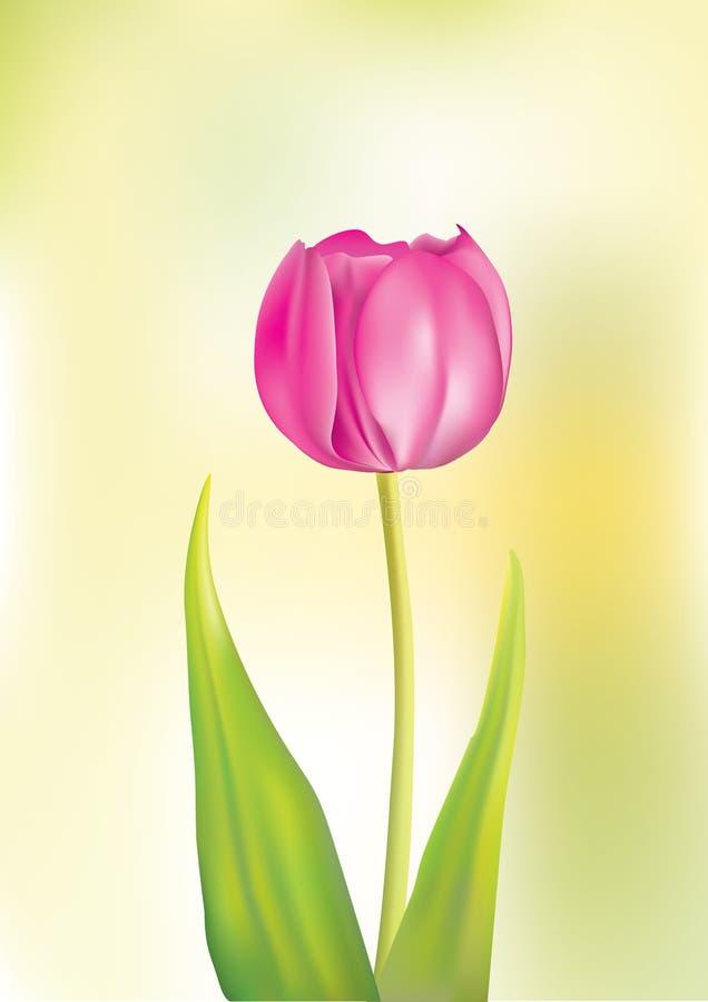 Tulip cor-de-rosa ilustração stock