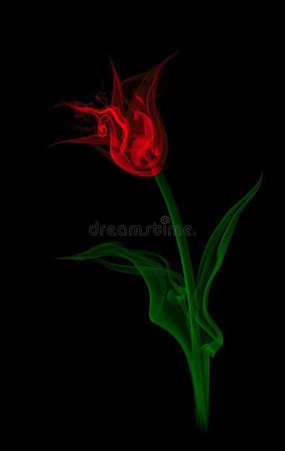 Tulip do fumo. foto de stock