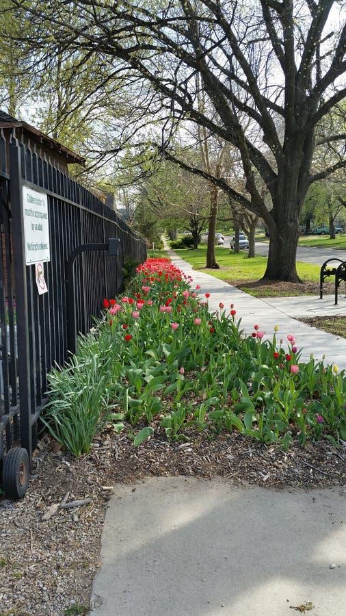 Tulip Fence image stock