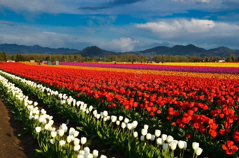 Tulip Festival royalty-vrije stock afbeeldingen