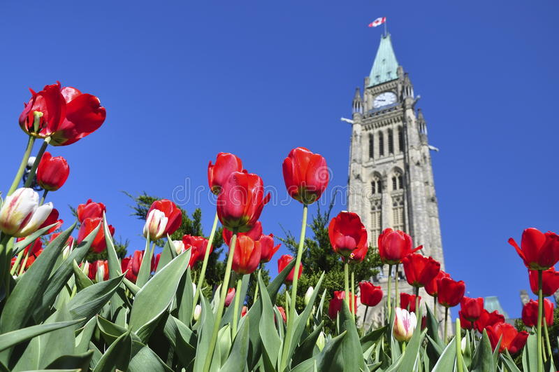 Tulip Festival in Ottawa royalty free stock photo