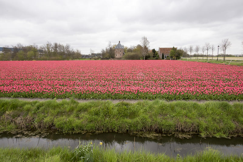 Tulip field Castle stock photography