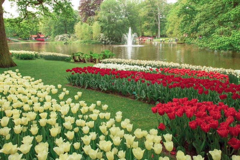 Tulip field in Keukenhof Gardens, Lisse, Netherlands royalty free stock images