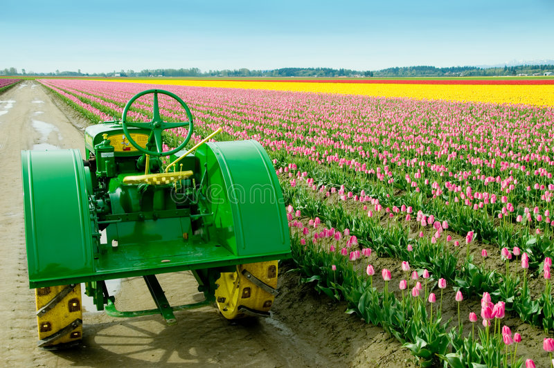 Tulip Field Tractor. Old John Deere farm tractor at the tulip fields in Skagit Valley, WA royalty free stock photos