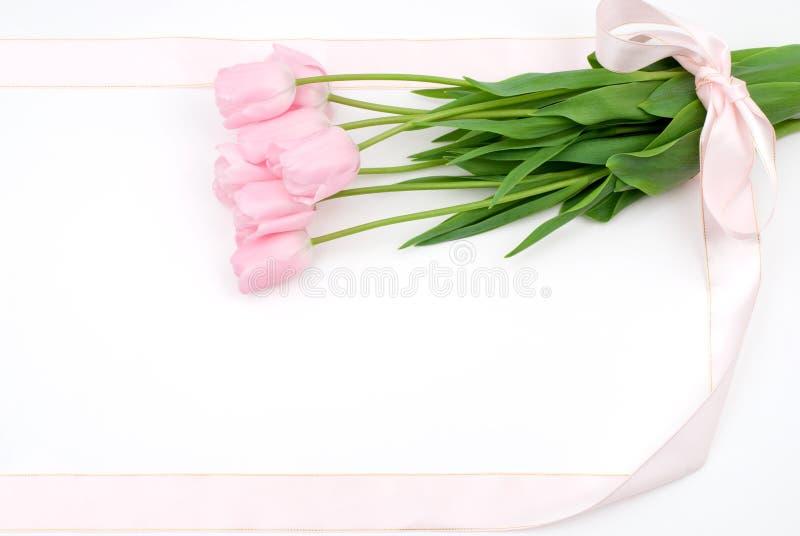 Download Tulip flower stock photo. Image of pink, celebration - 18827888