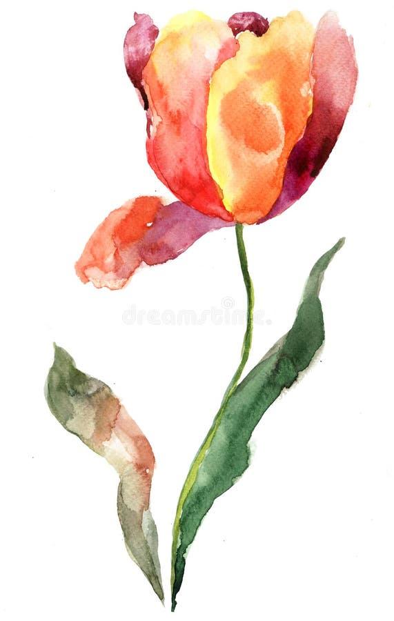 Download Tulip flower stock illustration. Image of ornament, vintage - 24773704