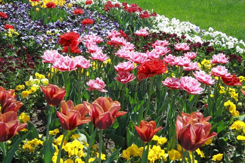 Tulip Flower Background - de Voorraadfoto's van de Lentebloemen royalty-vrije stock foto's