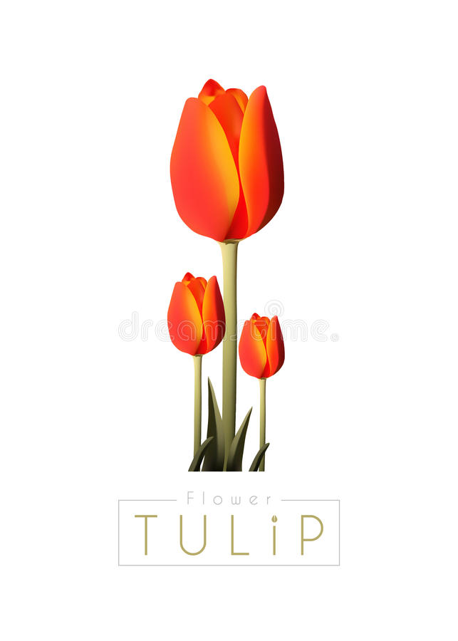 Tulip. Flower Background Illustration Vector royalty free illustration