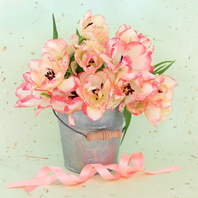Tulip Flower Beauty royaltyfri foto