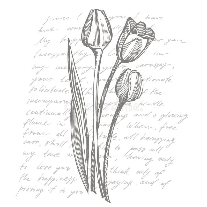 tulip flower garden stock illustrations  tulip