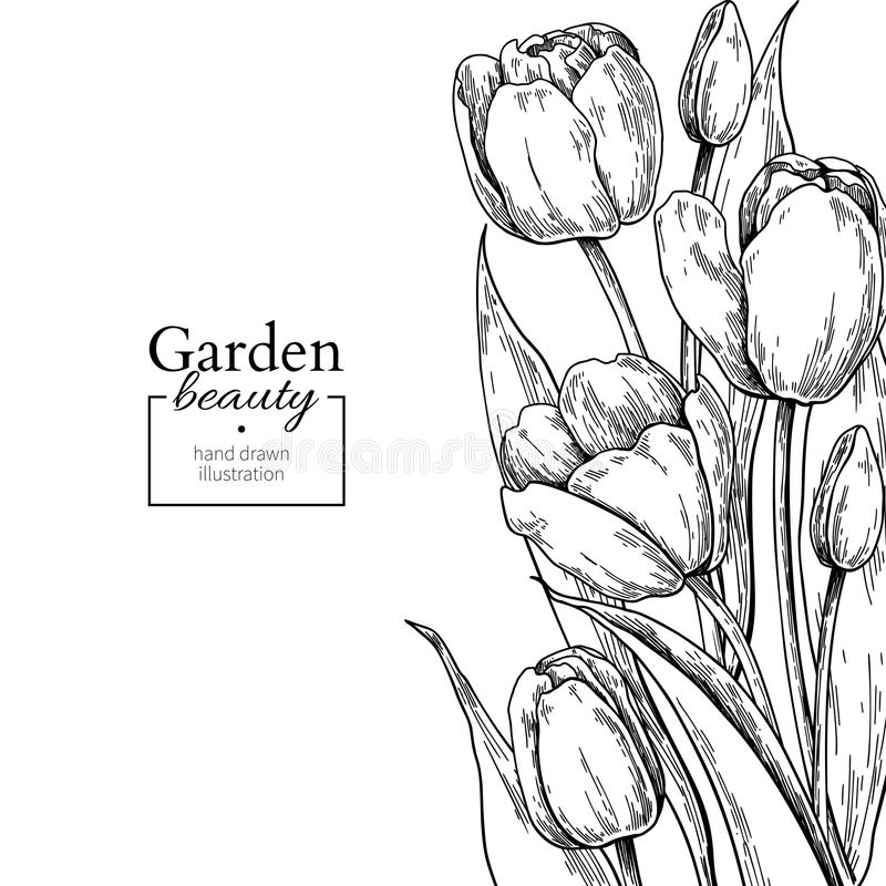 Tulip flower and leaves drawing border. Vector hand drawn engraved floral frame. Botanical Black ink sketch. Great for tattoo, wedding invitations, greeting stock illustration