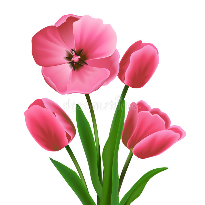Tulip flower pink. Pink beautiful blossoming tulip flower bouquet realistic vector illustration vector illustration