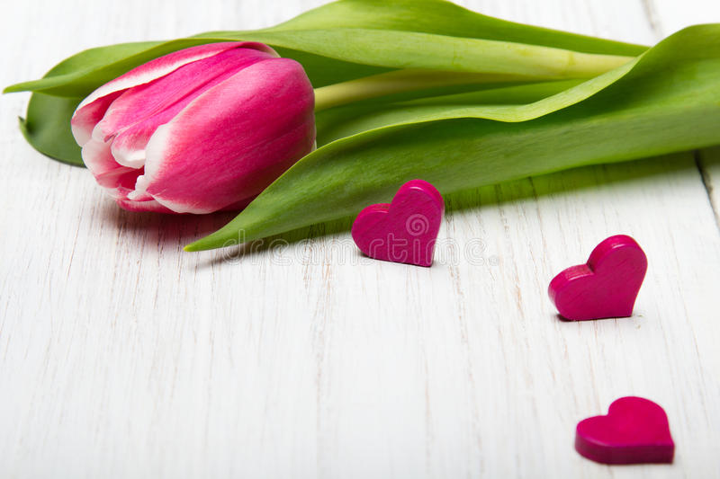 Tulip flower small hearts on white wooden background, stock photo