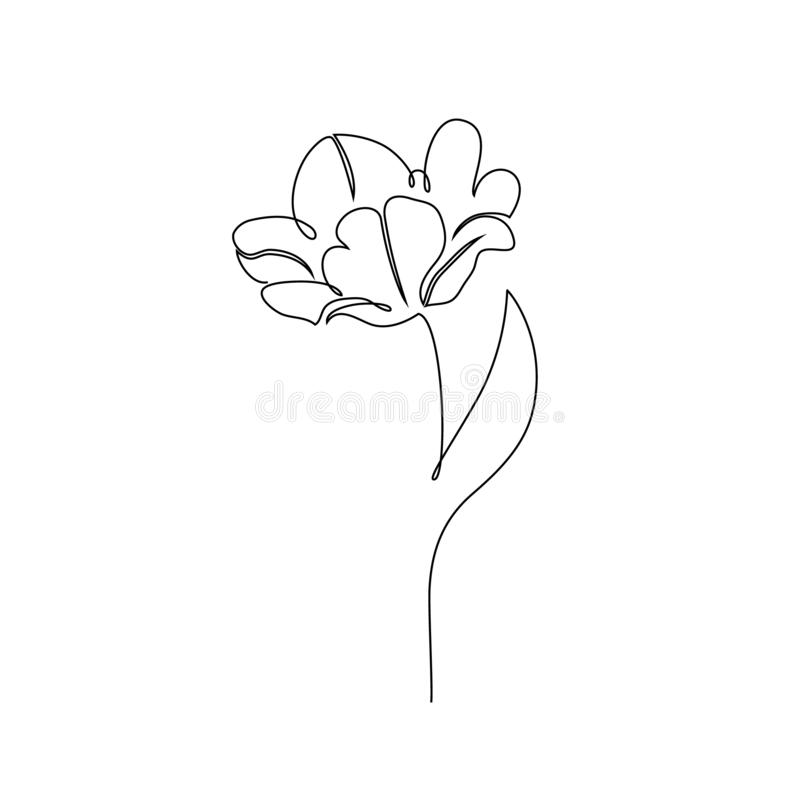 Tulip flower on white royalty free illustration