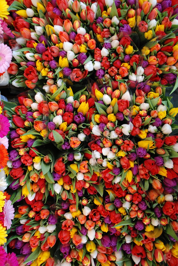 Tulip flowers stock images