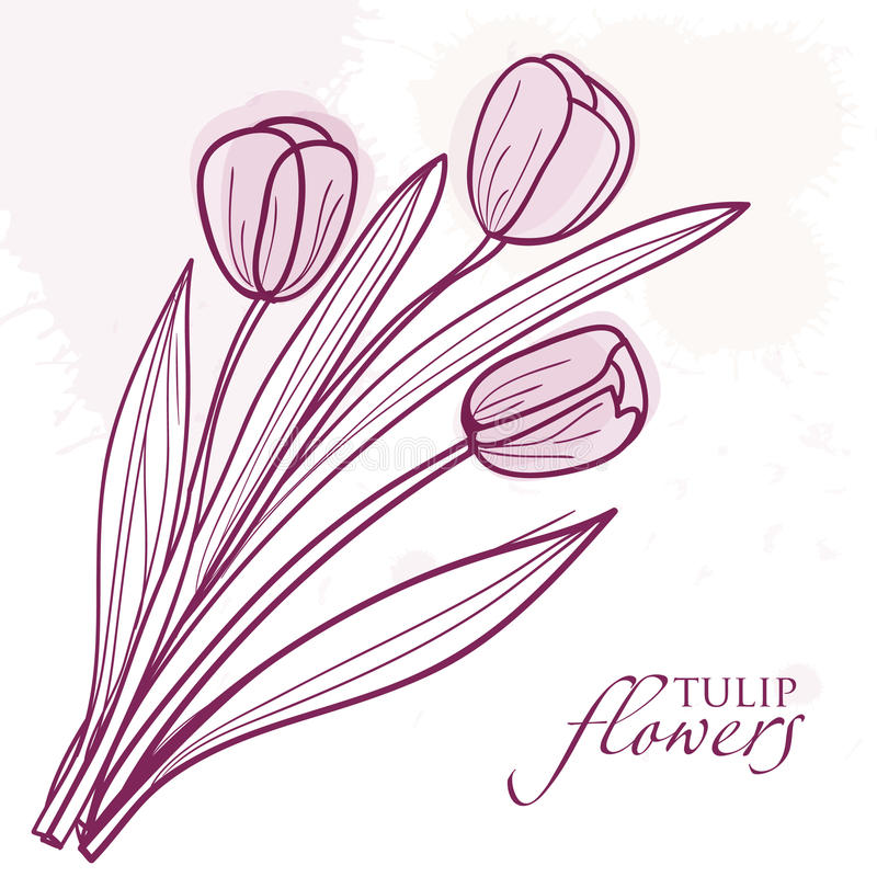 Tulip Flowers Isolated On  Background Royalty Free Stock Image