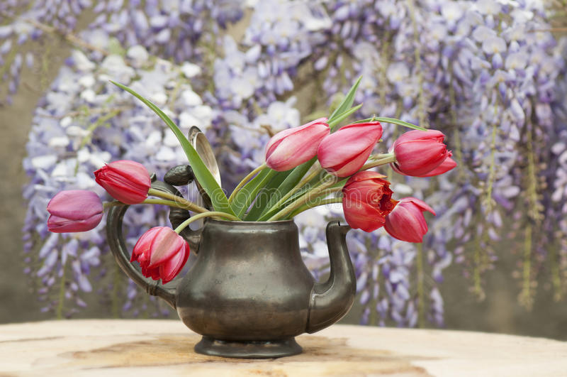 Tulip flowers royalty free stock photo
