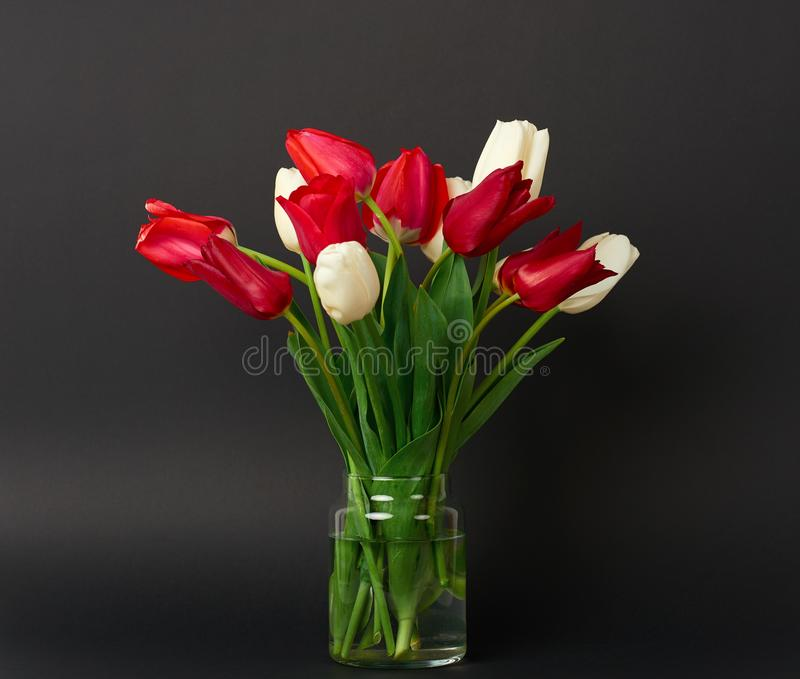 Tulip flowers are in a vase on black background stock photos