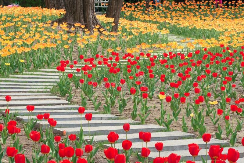 Tulip Garden royalty-vrije stock afbeelding