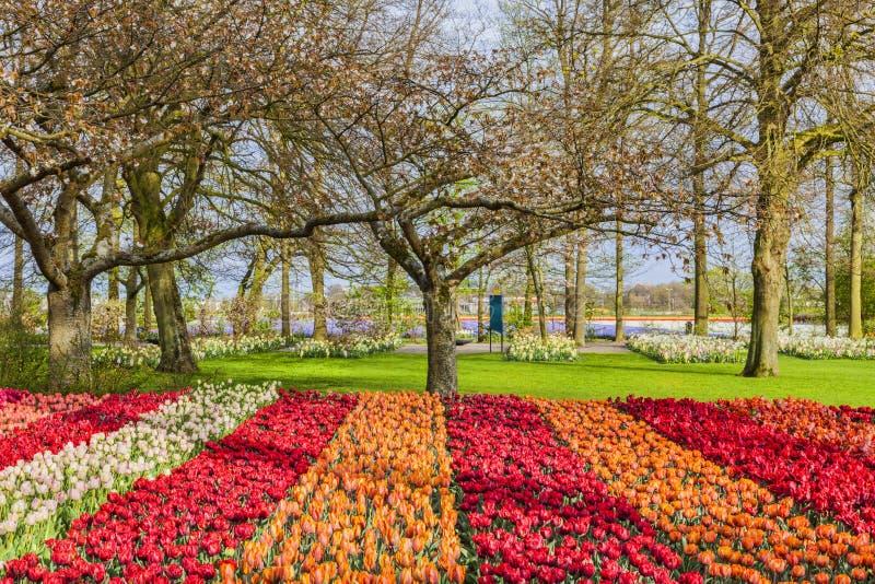 Tulip Garden lizenzfreie stockfotografie