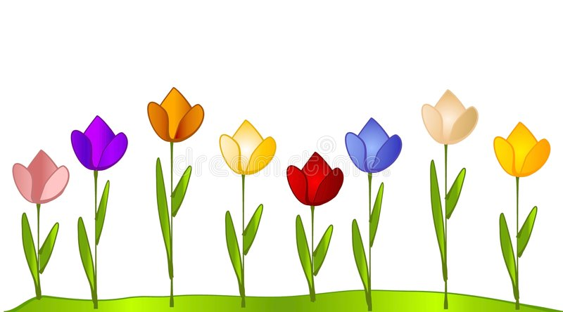 Tulip Garden Row of Tulips. A clip art illustration of a row of multi-colored tulips flower garden