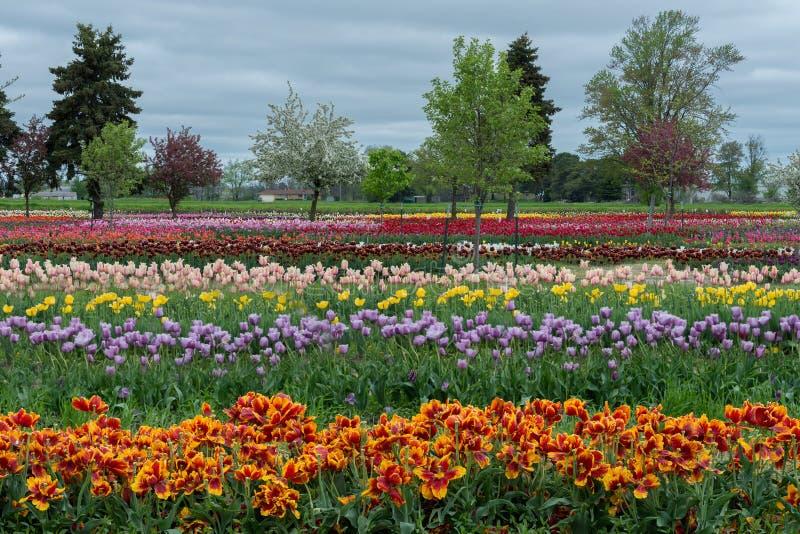 Tulip Gardens fotografía de archivo
