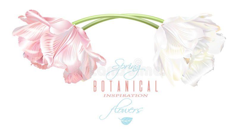 Tulip horizontal card. Vector horizontal card with white and pink tulip flowers. Spring tender design for natural cosmetics, perfume, florist shop. Can be used stock illustration
