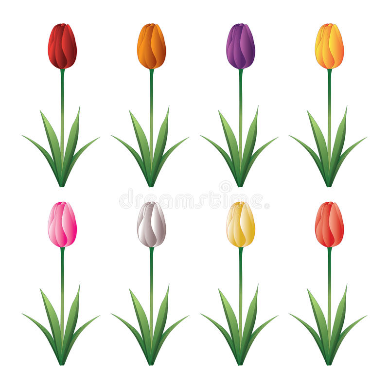 Tulip. Illustration of a tulip with stem and leaves in eight different colors royalty free illustration