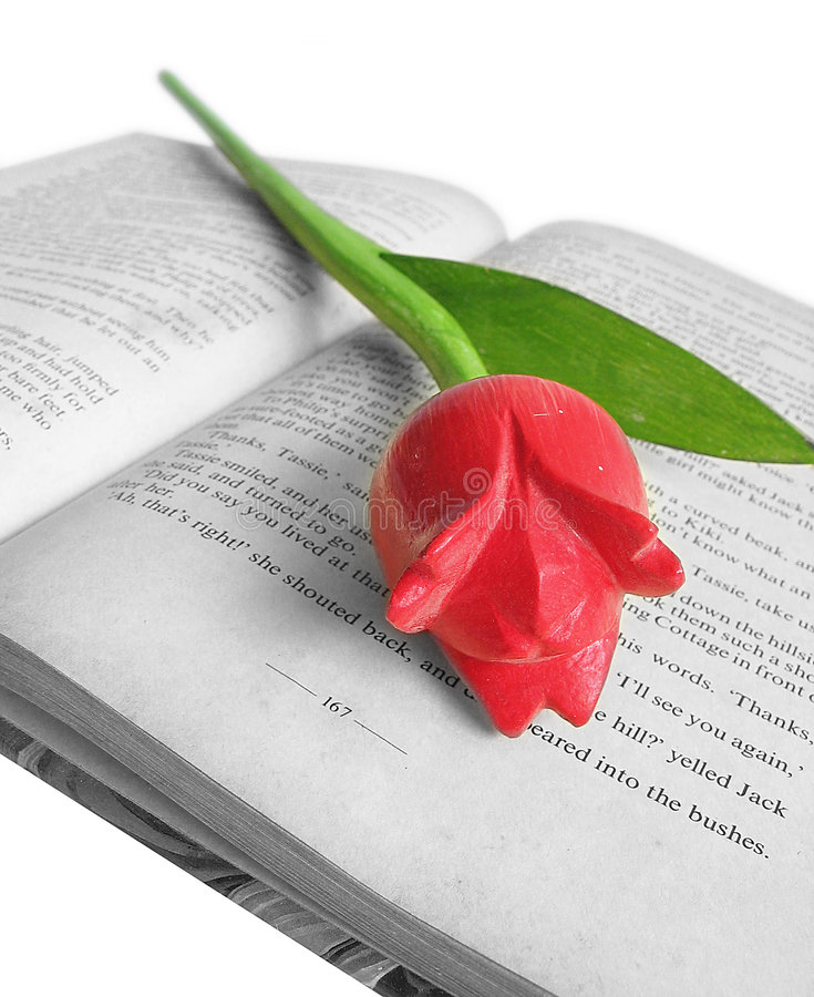Tulip no livro imagem de stock royalty free