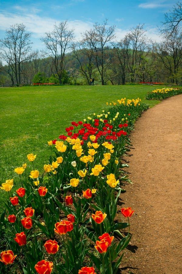 Tulip Path a Monticello, la Virginia immagine stock