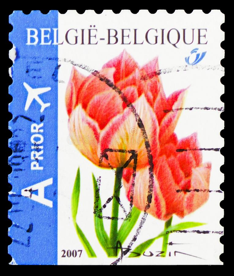 Tulip Peach Blossom Selfadhesive, parte inferior sin perforar, serie de las flores, circa 2007 fotos de archivo