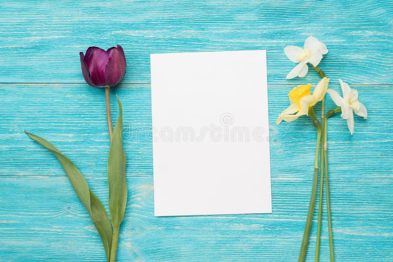 Tulip, primulas, paper card, turquoise background royalty free stock photos