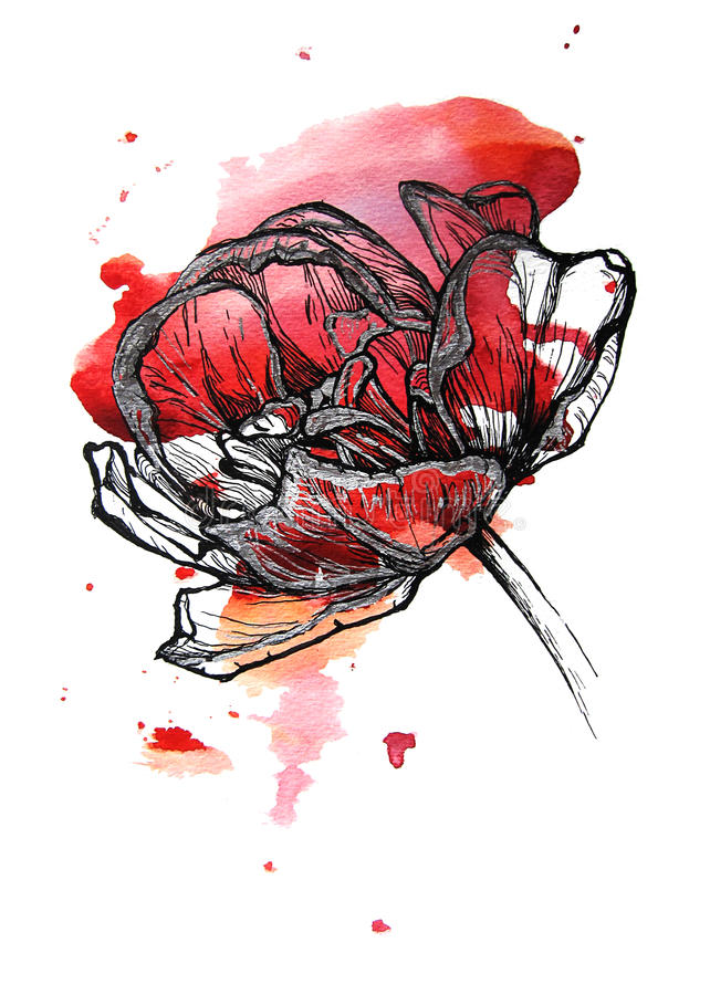 Tulip. Red tulip handmade on watercolor splash. on white background. Fabric texture. Template for scrapbook vector illustration
