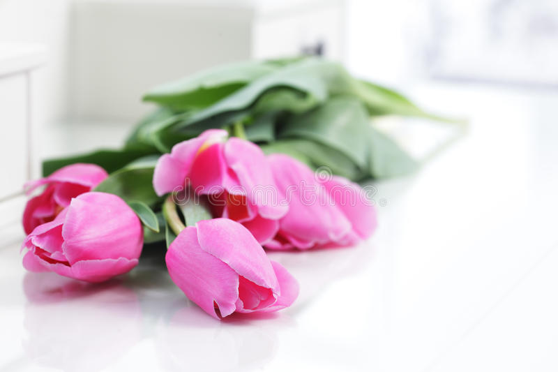 Tulip in room royalty free stock photos
